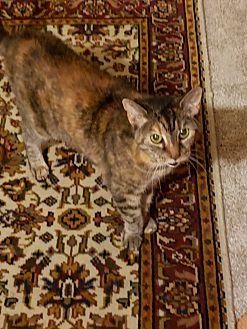 Adopt A Pet :: miss janet  - millville, NJ
