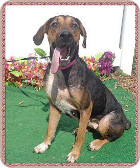 Hound (Unknown Type) Mix Dog for adoption in Marietta, Georgia - DASH