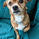 Adopt A Pet :: Sasha - ADOPTION PENDING!!