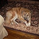 Adopt A Pet :: Jess