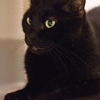 Adopt A Pet :: Rhea - Grayslake, IL