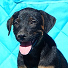 Adopt A Pet :: Crimson