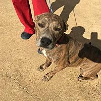 Adopt A Pet :: Gigi - Covington, TN