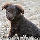 Adopt A Pet :: Mosby