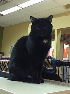 Adopt A Pet :: Adam  - Blasdell, NY
