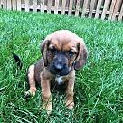 Adopt A Pet :: Backstrom
