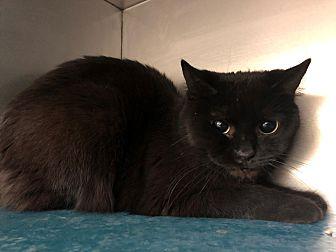 Adopt A Pet :: Donalda  - Moose Jaw, SK