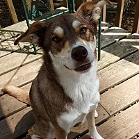 Adopt A Pet :: Charlie - Warkworth, ON