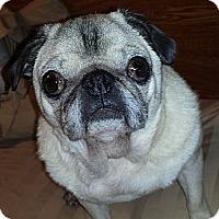 Adopt A Pet :: Mia - Hinckley, MN
