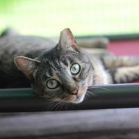 Adopt A Pet :: Tabitha - New Freedom, PA