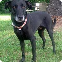 Adopt A Pet :: Flynn II - Waldorf, MD