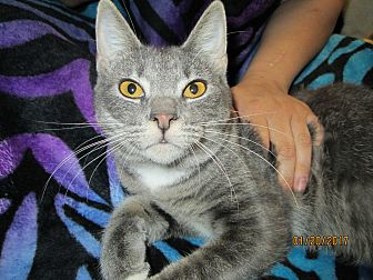 Adopt A Pet :: Marla  - Floral City, FL