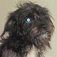 Adopt A Pet :: Dixie - Germantown, MD