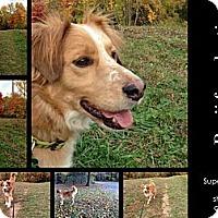Adopt A Pet :: Benji - Alexandria, VA