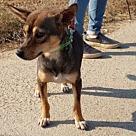 Adopt A Pet :: Ringo