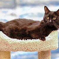 Adopt A Pet :: Eclipse C1966 - Shakopee, MN