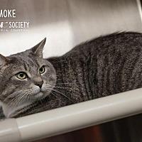 Adopt A Pet :: Smoke - Johnstown, PA