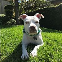 Adopt A Pet :: KING - Chandler, AZ