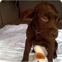Adopt A Pet :: Leonard - Houston, TX