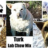 Adopt A Pet :: Turk - Battle Creek, MI