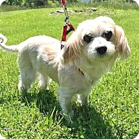 Adopt A Pet :: Flower: Pendingl! (VA) - Madison, WI