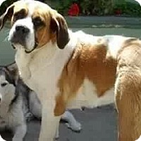 Adopt A Pet :: Indie - Long Beach, CA