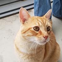 Adopt A Pet :: Buddy - Columbus, OH