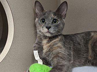 Adopt A Pet :: Plum  - Laramie, WY