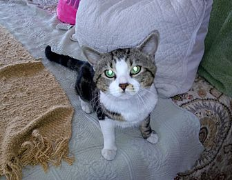 Adopt A Pet :: Ollie  - Dumfries, VA