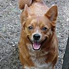 Adopt A Pet :: Carly