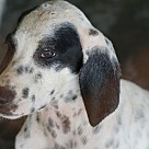 Adopt A Pet :: RUM