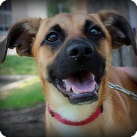 Adopt A Pet :: Toby - Irving, TX