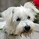 Adopt A Pet :: Pete B