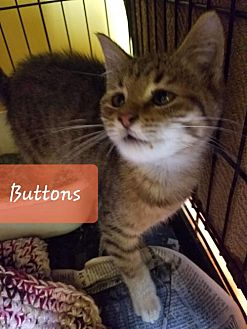 Adopt A Pet :: Buttons  - Mt Vernon, IN