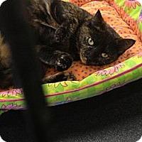 Adopt A Pet :: Sydney - St. Cloud, FL