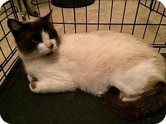 Manchester Ct Cat Adoption