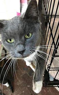 Adopt A Pet :: Skiffy  - Devon, PA