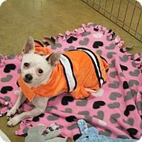 Adopt A Pet :: Spike - Sacramento, CA