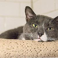 Adopt A Pet :: Elmer - New York, NY