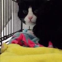 Adopt A Pet :: Punky - Winona, MN