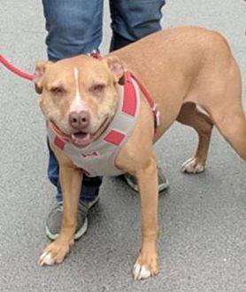 Adopt A Pet :: Sassy  - Anchorage, AK