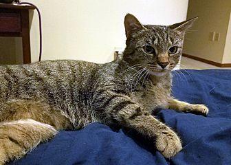 Adopt A Pet :: Prancer  - Troy, MI
