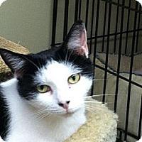 Adopt A Pet :: PEPPERMINT PATSY - MECHANICSVILLE, VA