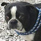Adopt A Pet :: Victor