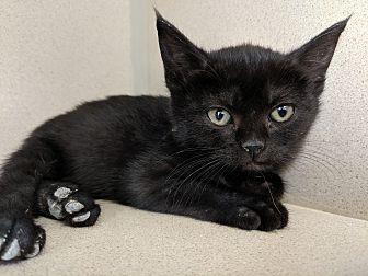 Adopt A Pet :: Polly  - Laramie, WY
