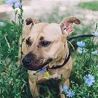 Adopt A Pet :: Sasha - Sharon Center, OH