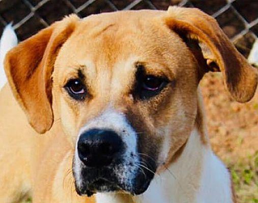 Enfield Ct St Bernard Meet George Adopted A Pet For