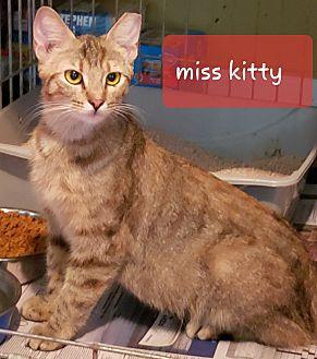 Adopt A Pet :: miss kitty  - millville, NJ