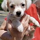 Adopt A Pet :: Bree - NO LONGER ACCEPTING APPLICATIONS!!