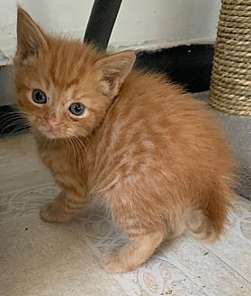 Adopt A Pet :: Heidi  - Dumfries, VA